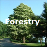 Forestry.png